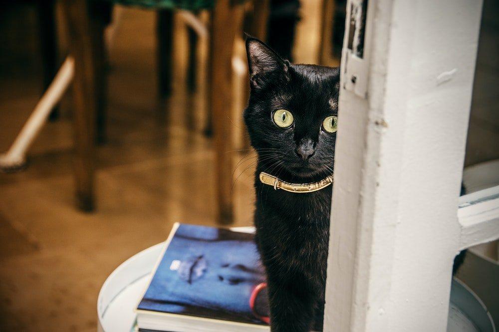 cat gps tracker